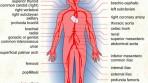 İnsan Biyolojisi